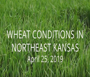 Update With Kansas Wheat Alliance 1