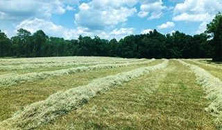 Hay / Forage Seeds