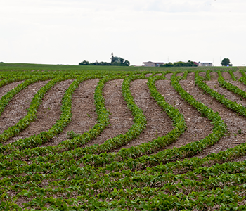 MANAGING HERBICIDES IN DICAMBA TOLERANT SOYBEANS