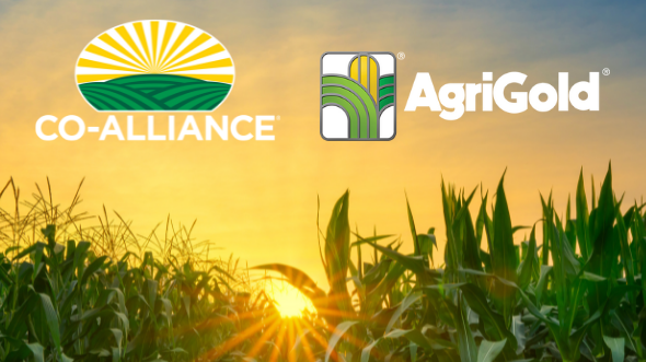 In 2021 Co-Alliance invested in the power of our seed portfolio by entering into a supply agreement with AgriGold to be the exclusive retail provider in our geography