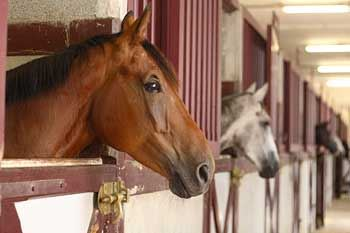Tan Horse sticking his head out of his pen in a barn