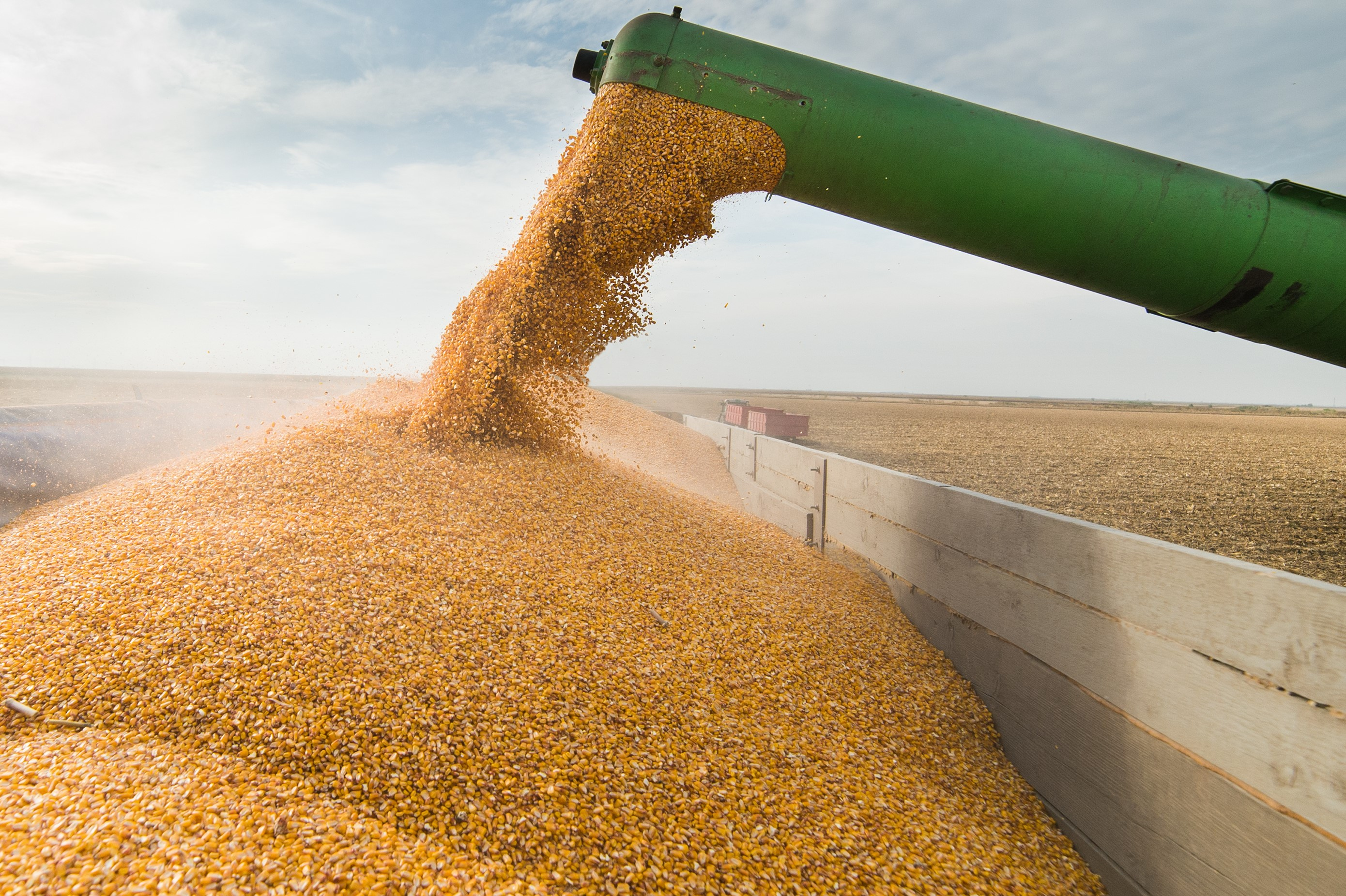 Are You Ready For Wet Grain?