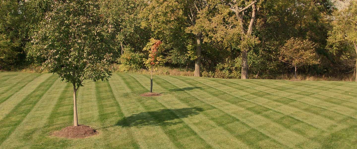community lawn care - Lawncare