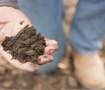 Early Soil Sample May Save You Time, Money