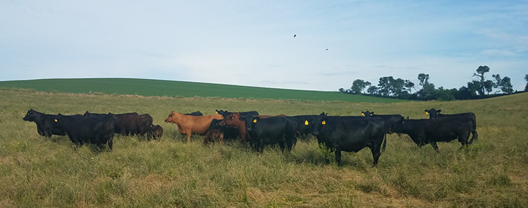 Precision Ag   Agronomy Experts   Grain Specialist - CVA