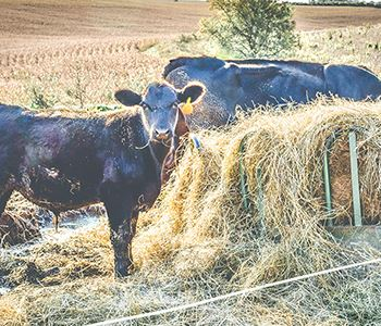 Supplementing Cattle Forages with Liquid