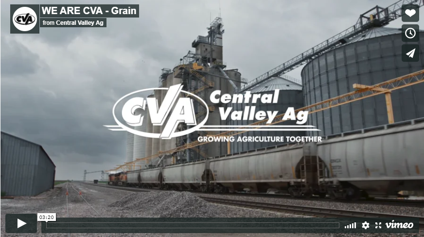 we are cva grain