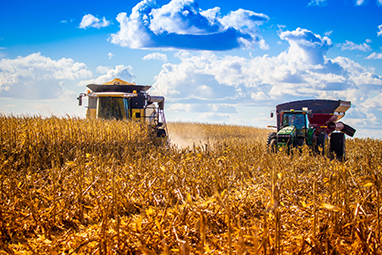 Combine harvesting field corn with Tractor and grain cart