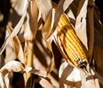 Great Bend Co-op Agronomy Weekly - September 24, 2018