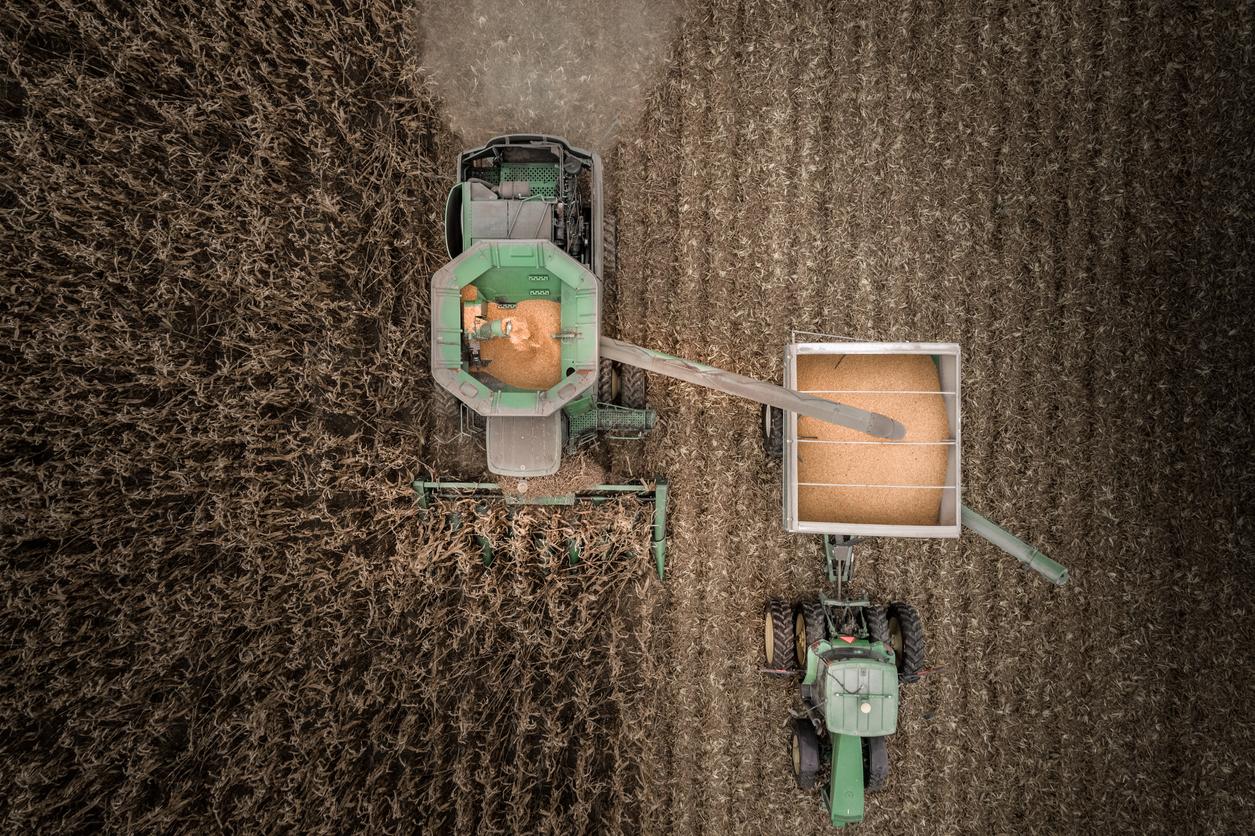 Drone Image overlooking combine harvesting corn in field.