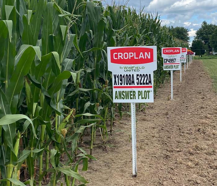 Croplan Corn Plot