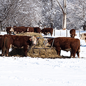 Livestock, Winter Weather on the Farm