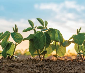 Fully Insure Double Crop Soybeans with TMA