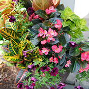 Fertilizing and Watering Container Plants