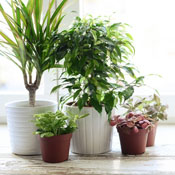 Caring For Indoor House Plants