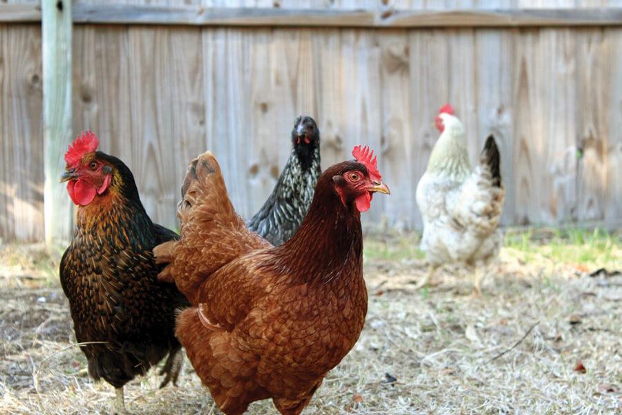 Equine | Pet Supplies | Pet Food | Poultry | Livestock