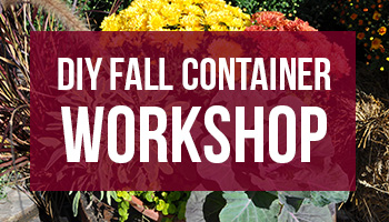 Ladies Night: DIY Fall Container Workshop 9/24