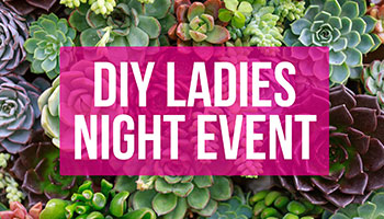 DIY Ladies Night Event: Succulent Gardening